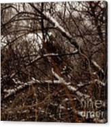 Beyond The Thicket - Abandoned Canvas Print