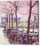 Bicycles Under The Blooming Trees. Pink Spring In Amsterdam  Canvas Print