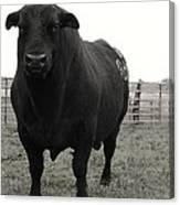 Big Bad Black Bull Canvas Print