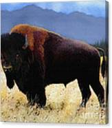 Big Bison Canvas Print