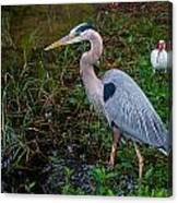 Big Blue And The Ibis Canvas Print