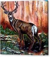 Big Buck Canvas Print