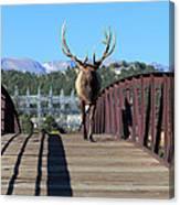 Big Bull On The Bridge Canvas Print