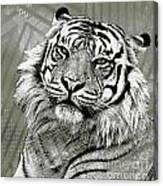 Big Cat Canvas Print