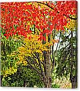 Big Colorful Sleep Canvas Print
