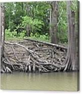 Big Cypress River Trees Canvas Print