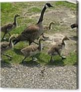 Big Family Crossing The Road Canvas Print
