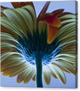 Big Flower Canvas Print