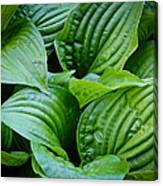 Tropical Green Leaves Canvas Print