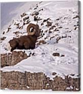 Big Horn Ram   #7036 Canvas Print