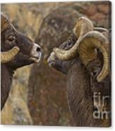 Big Horn Rams   #4989 - Signed Canvas Print