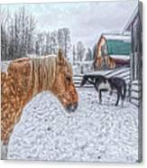 Big Horse  Little Horse Canvas Print