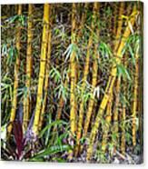 Big Island Bamboo Canvas Print