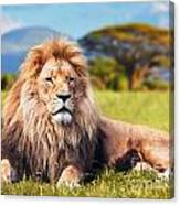 Big Lion Lying On Savannah Grass Canvas Print