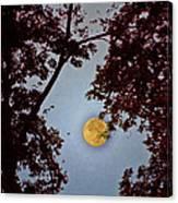 Big Old Autumn Moon Canvas Print