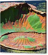 Big Pad Canvas Print