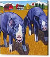 Big Pigs Canvas Print