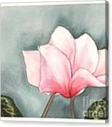 Big Pink Cyclamen Canvas Print