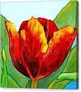 Big Red Tulip Canvas Print