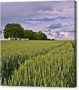 Big Sky Montana Wheat Field  Canvas Print