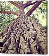 Big Tree Bark Canvas Print