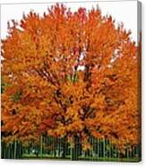 Big Tree In Autumn Canvas Print