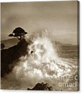 Big Wave Hitting The Lone Cypress Tree Pebble Beach California 1916 Canvas Print