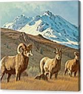 Bighorn Below Electric Peak Canvas Print