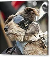 Biker Dog Canvas Print
