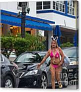Bikini Bunny In Miami Canvas Print