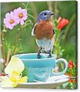 Billy Bluebird Having Tea Canvas Print
