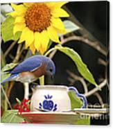 Bluebird And Tea Cup Canvas Print