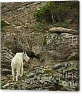 Billy Goat 3 Canvas Print