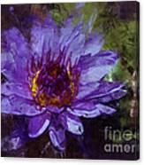 Biltmore Estate Water Lily Garden #2 Canvas Print