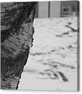 Birch Bark And Snow In Black And White Canvas Print