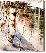 Birch By Stream Canvas Print
