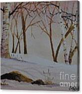 Birch Drift Canvas Print