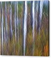 Birch Fall Abstract Canvas Print