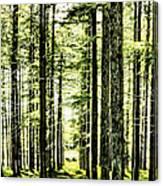 Birch Forest Fractal Canvas Print