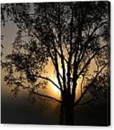 Birch In Silhouette Canvas Print