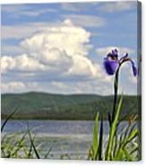Birch Lake Iris Canvas Print
