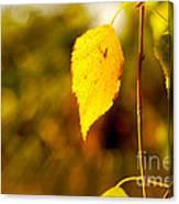 Birch Leaves Canvas Print