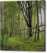 Birch Pathway Canvas Print
