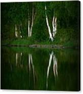 Birch Reflection Canvas Print