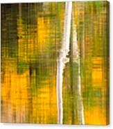 Birch Reflections Canvas Print