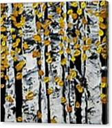 Birch Study Fall Canvas Print