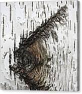 Birch Textures 30 Canvas Print