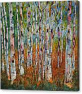 Birch Tranquility Canvas Print