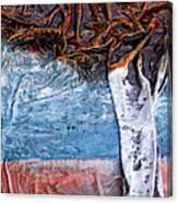 Birch Tree Canvas Print