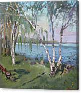 Birch Trees By The River Canvas Print